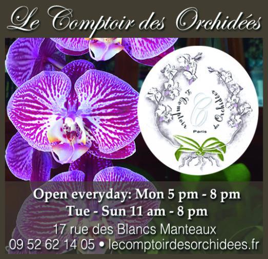 Le comptoir des orchidées, festival de couleurs et de senteurs