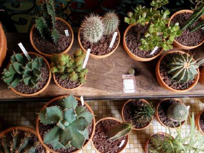 les succulents cactus. Black Bedroom Furniture Sets. Home Design Ideas