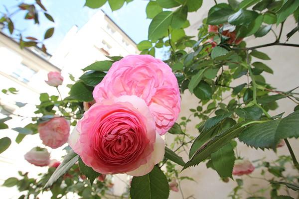 The Marais Secret Gardens